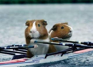 Funny Olympic Animal
