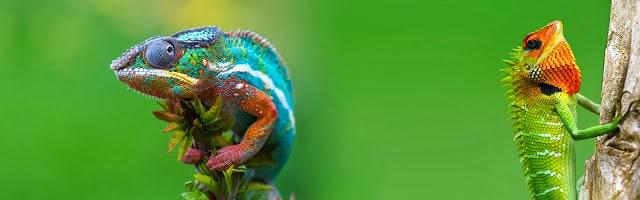 striped chameleon wallpaper hd - photo #13