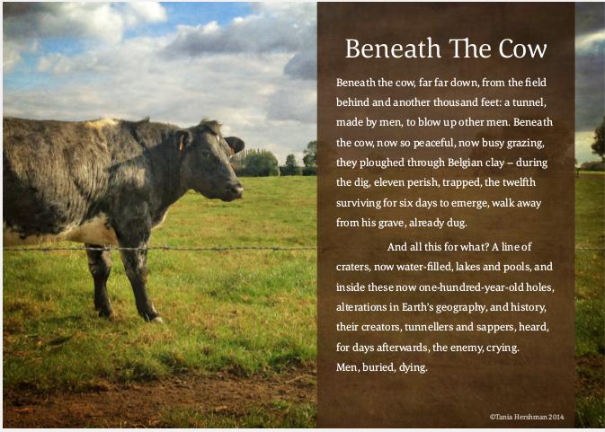 hindi essay on cow
