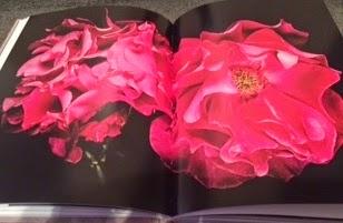 Nur Mahal rose named after Indian Mughal empress
