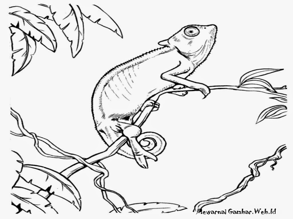 Download Buku Mewarnai Gratis Gambar Iguana