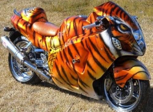 tiger bike