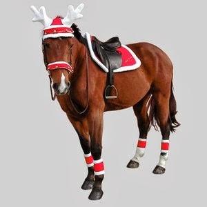 renhorn till häst