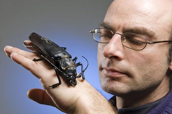 Kumbang Raksasa Ini Dapat Mematahkan Jari-Jari Anda