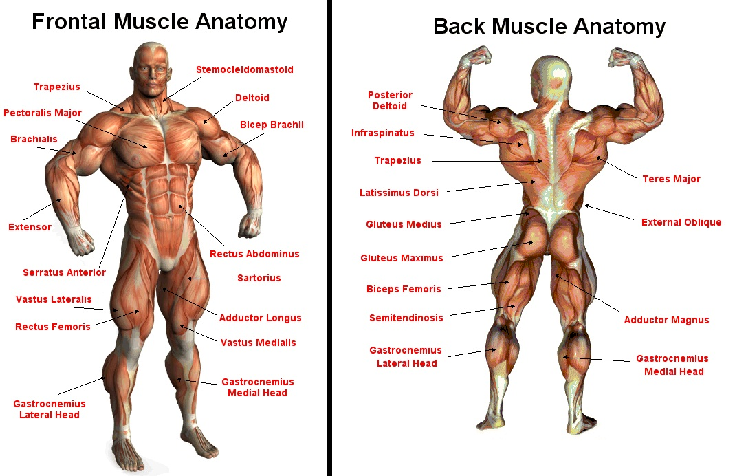 Muscle Mecca The Mecca Of Muscle Building And Transformation