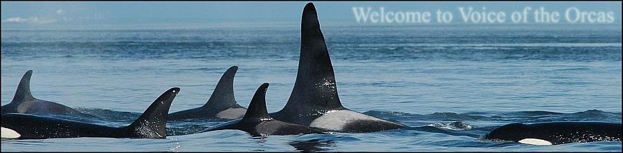 Voice of the Orcas
