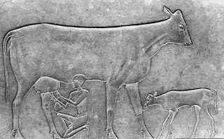 البقرة الدامعة