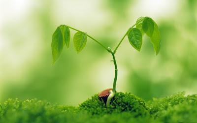 Gambar Pemandangan Indah hijau