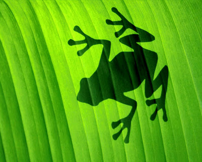 Frog Silhouette on Leaf HD Desktop Wallpaper