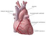 sakit jantung(lemah jantung)