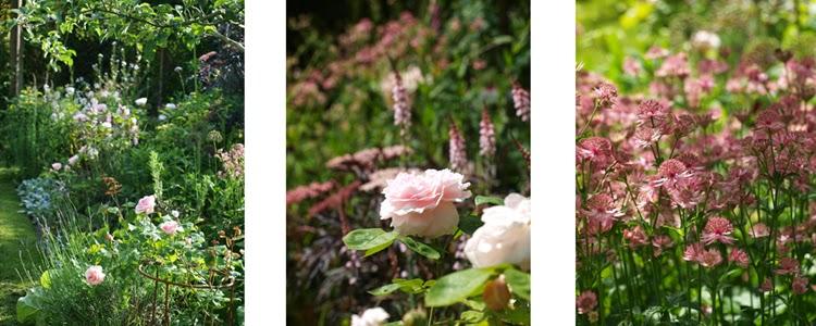 Bed med mørkt løv som kontrast til lyserøde blomster