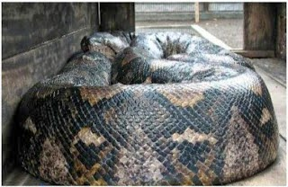 Ular python Guihua di Sumatera