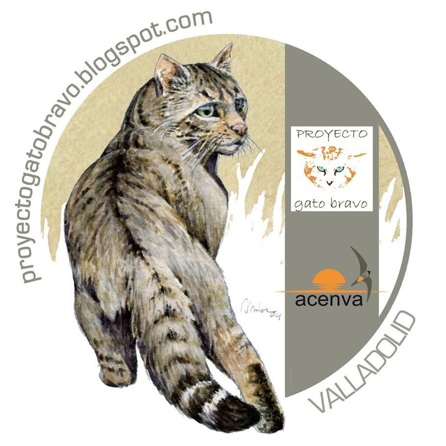 Proyecto Gato Bravo