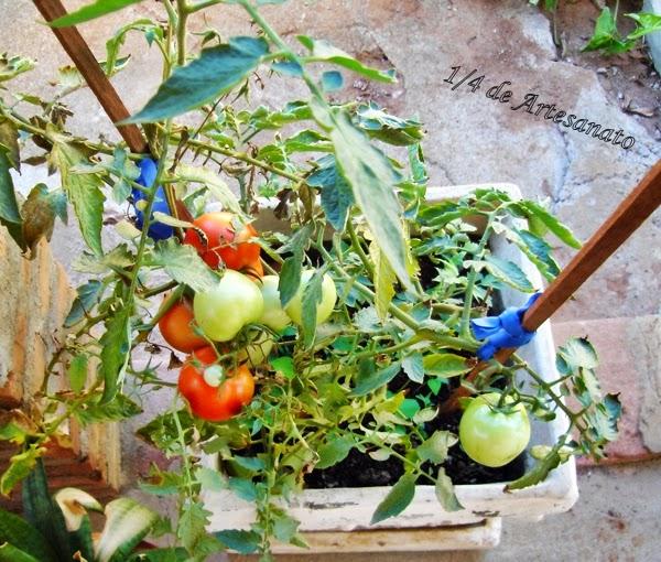 tomates cultivados no quintal