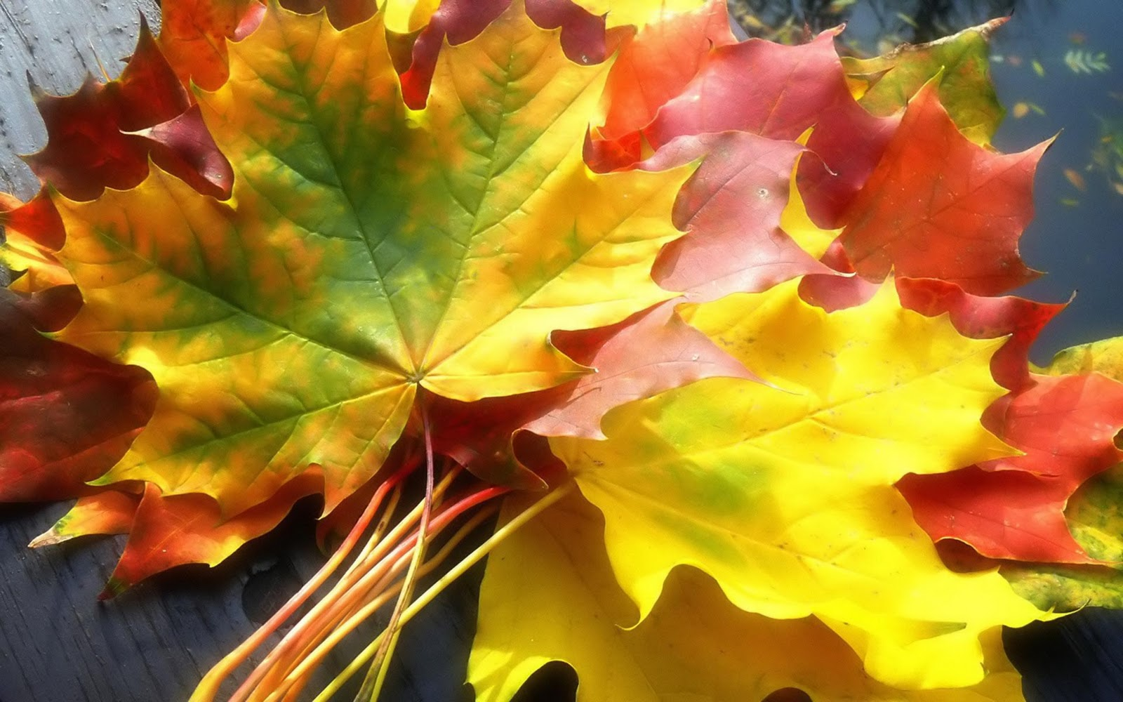 http://1.bp.blogspot.com/-Sx3Jkz6XeH8/TrCSxUfW2oI/AAAAAAAACd4/ERtXqNDtAwU/s1600/Autumn_leaves_hd_wallpaper.jpg