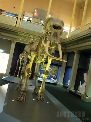 Australian Museum - Elephant Skeleton