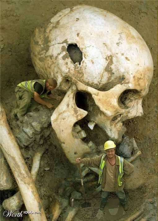 Smithsonian: El complejo de museos más grande del mundo Skull-4
