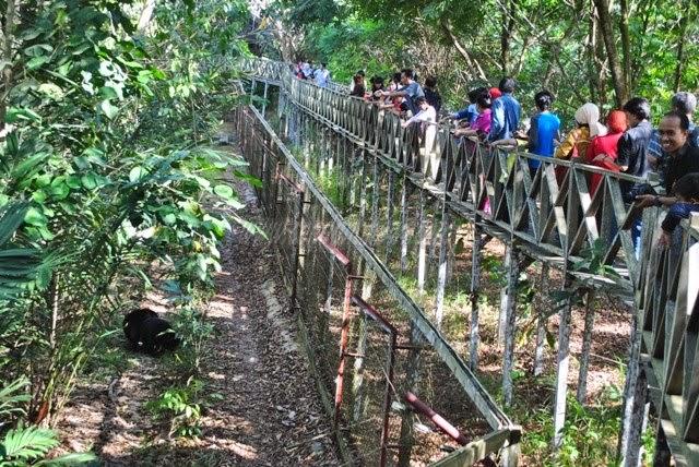 Menengok Beruang Madu Di Taman Pendidikan Lingkungan