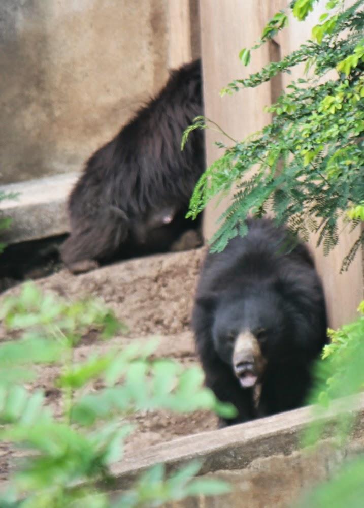 Bear at Katraj Zoo