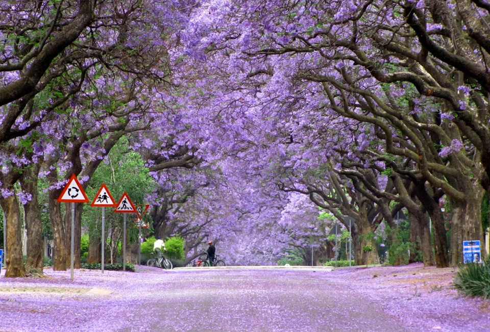 World's Most Beautiful Trees Photography - Angelic Hugs