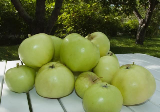 Gröna äpplen på ett vitt bord.