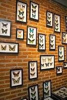 bandung butterfly park