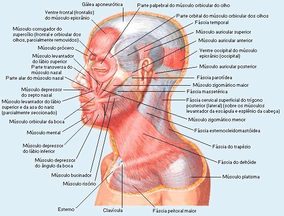 procesos en modelado: cabeza humano arcilla