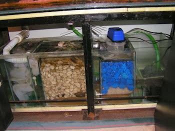 Tatlı su akvaryumlarındaki filtrasyon sistemi