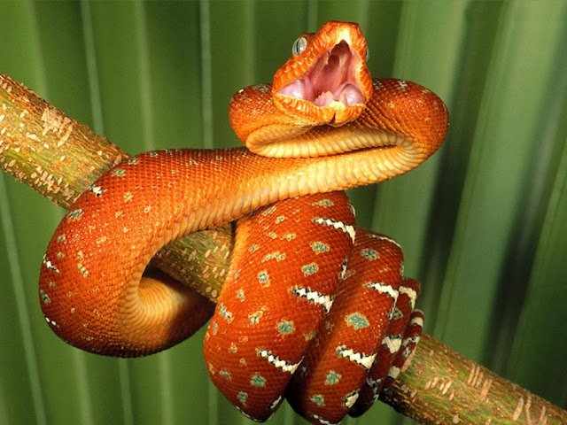 Viva La Ghash Interpreting Popular Dream Themes 2 Snakes