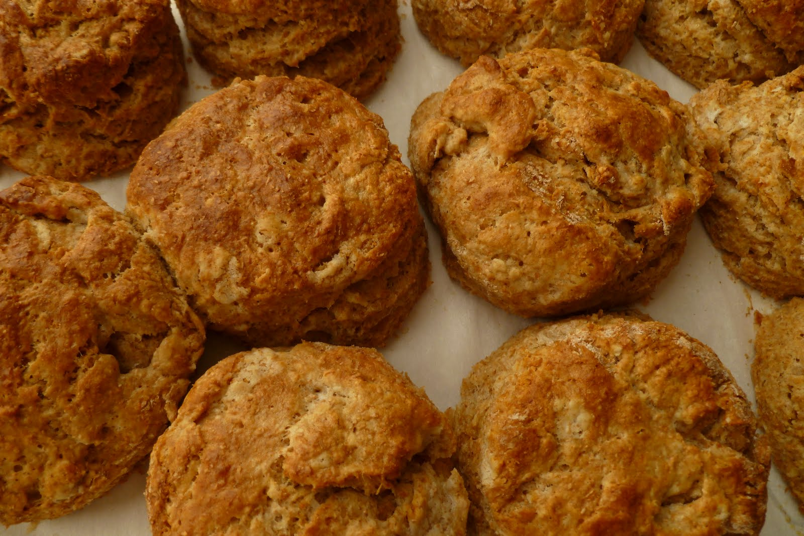 whole+wheat+honey+biscuits+-+whole+grain+baking.JPG