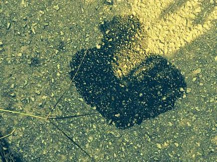 water stain in the shape of a heart