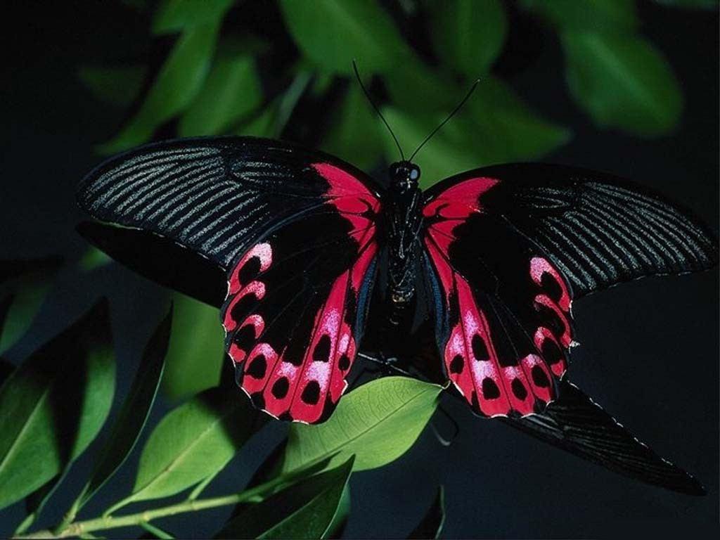 Beautiful Wallpapers for Desktop: Beautiful HD Butterfly ...