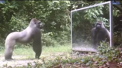Δείτε την αντίδραση άγριων ζώων στην θέα του ειδώλου τους στον καθρέφτη