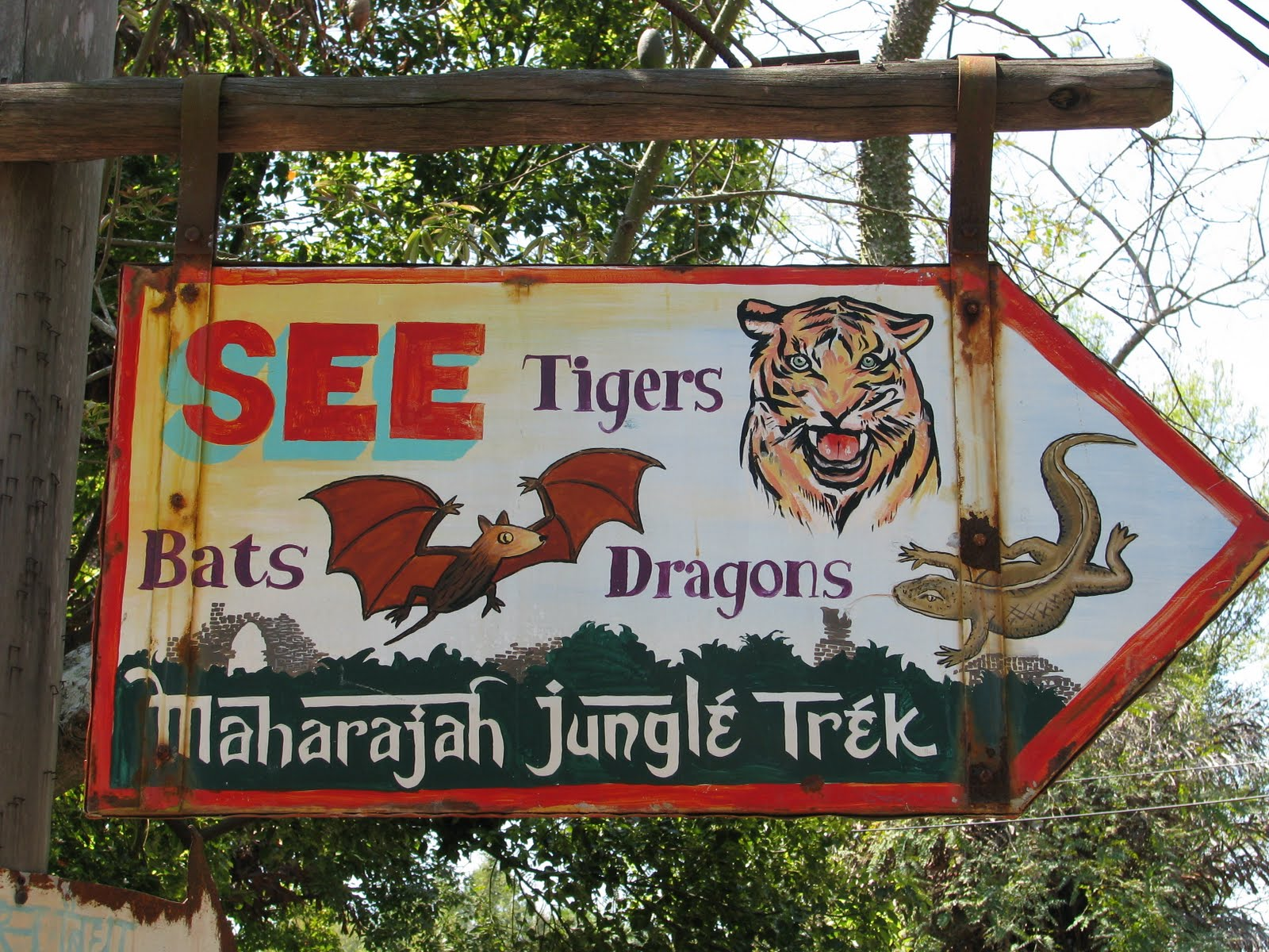 Tiger in Disney s Animal Kingdom Animals Birds  - tiger in disneys animal kingdom wallpapers