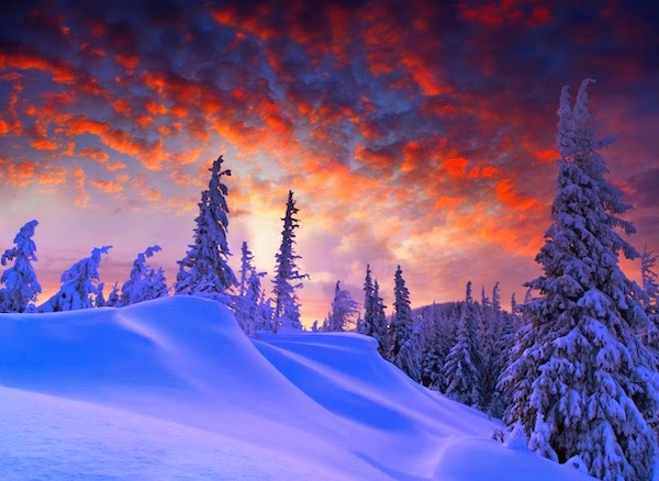 Nexus 6 Winter orange sky  Wallpaper