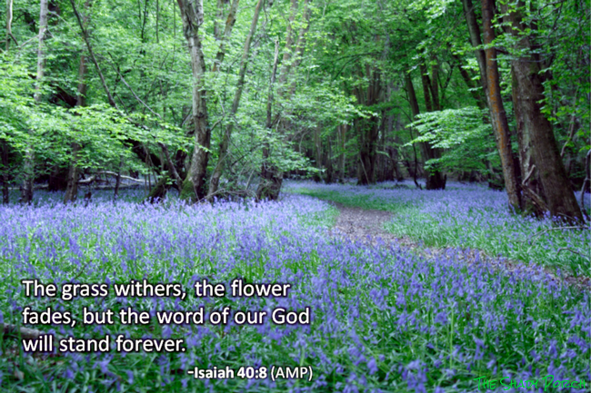 Isaiah 40:8 - The grass withers, the flowers fade but the word of God stands forever.