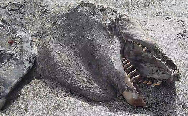 Mysterious Sea Monster Found On New Zealand Beach [Video ...