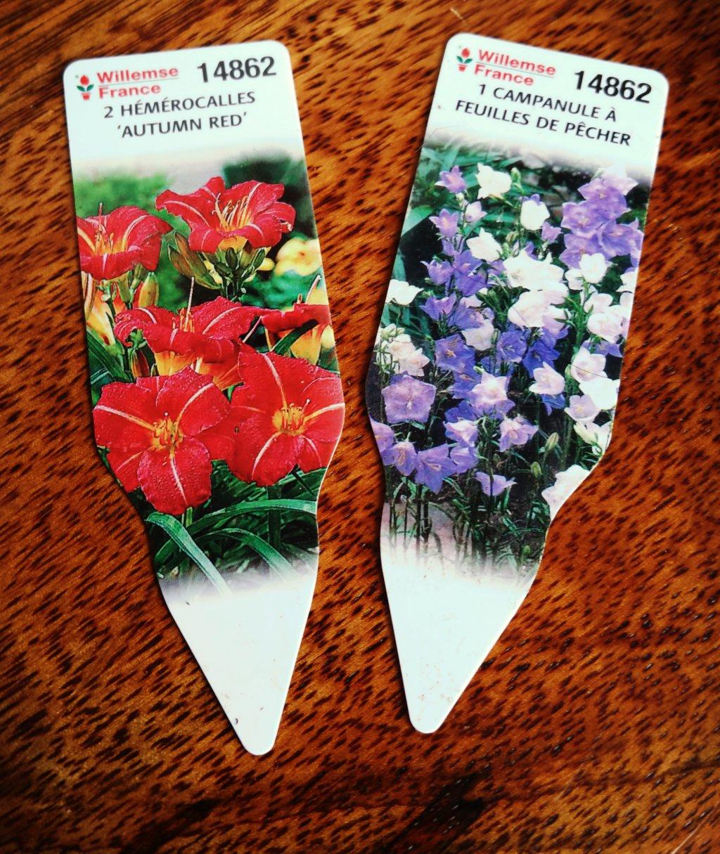 Derri re les murs de notre jardin cr ation d 39 un massif fleuri - Planter campanule des murs ...