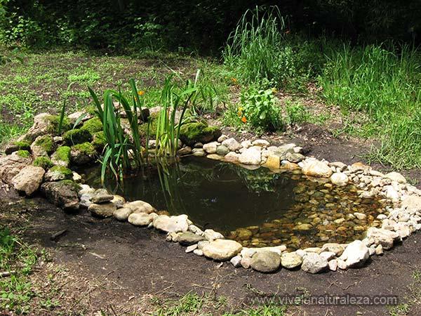 Blog de vive la naturaleza construir un estanque de pvc for Estanque natural