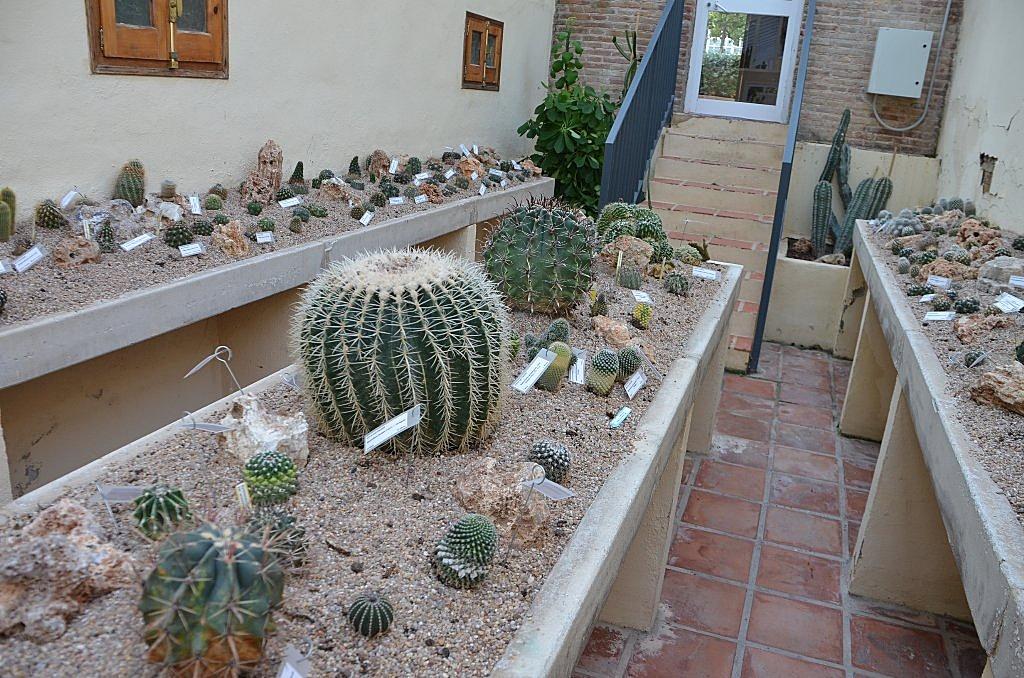 Floraciones en m laga y m s el jard n bot nico de for Jardin botanico en sevilla