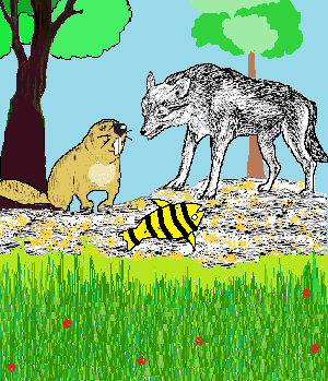 berang-berang dan serigala