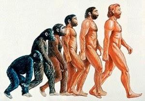Teoría de la evolución humana