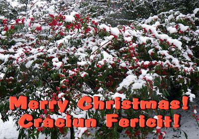Merry Christmas ! Craciun Fericit!