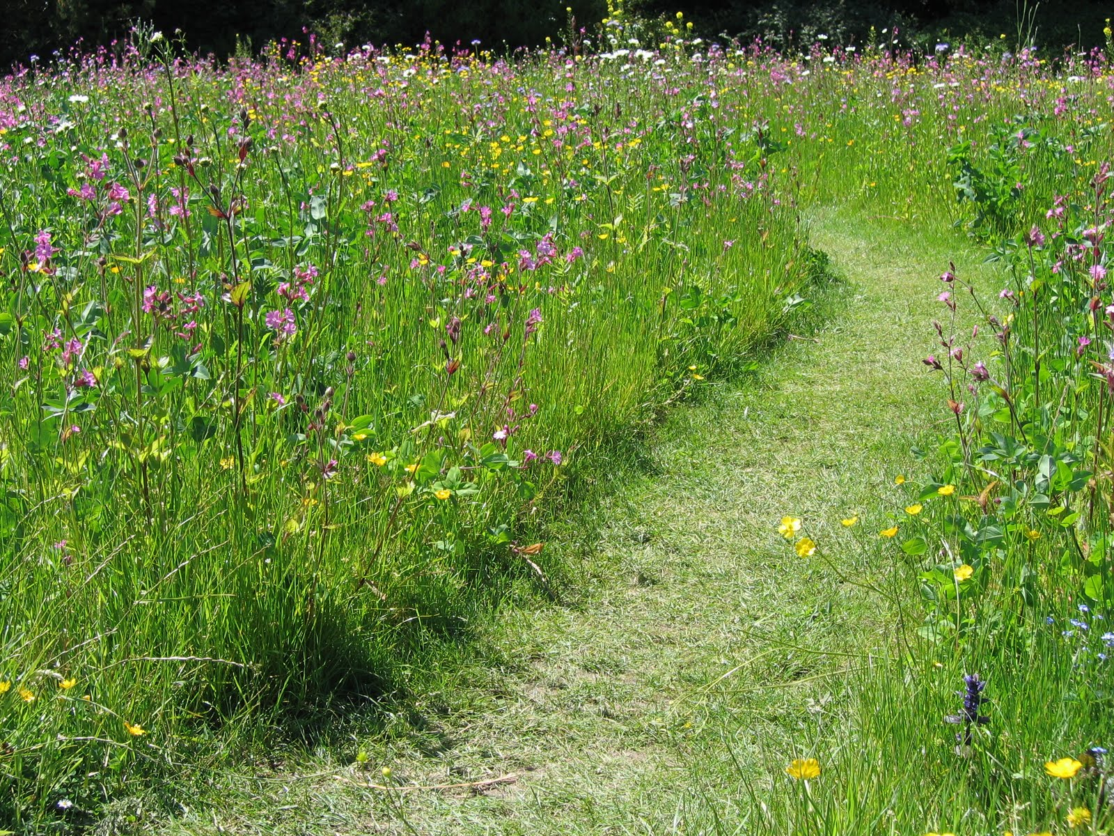 a north yorkshire garden design a yorkshire garden designer