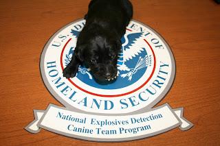 Dolan, TSA's 500th Pupp