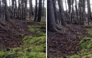 Відеоролик канадця, в якому продемонстровані дивні рухи землі в лісі Нової Шотландії.