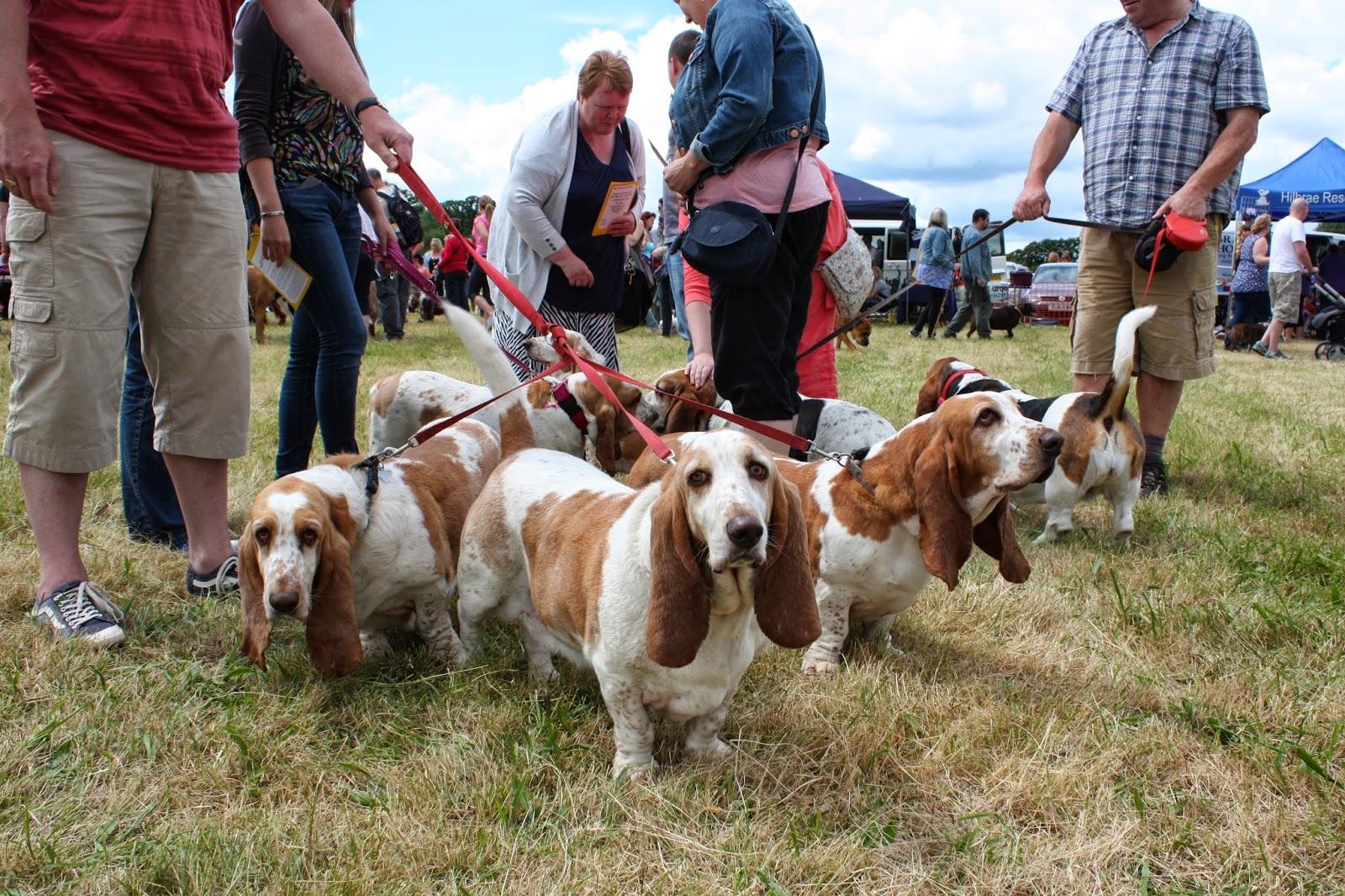 Dogs Trust Open Day Shrewsbury