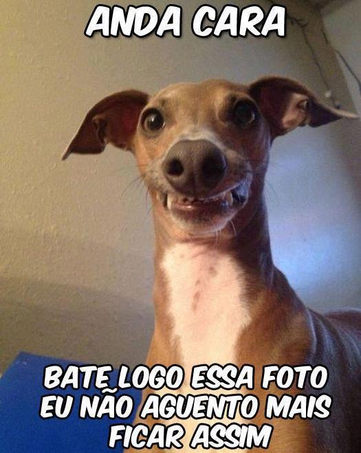 Famosos Cachorro sorrindo para foto - Frases pro Face! XV99