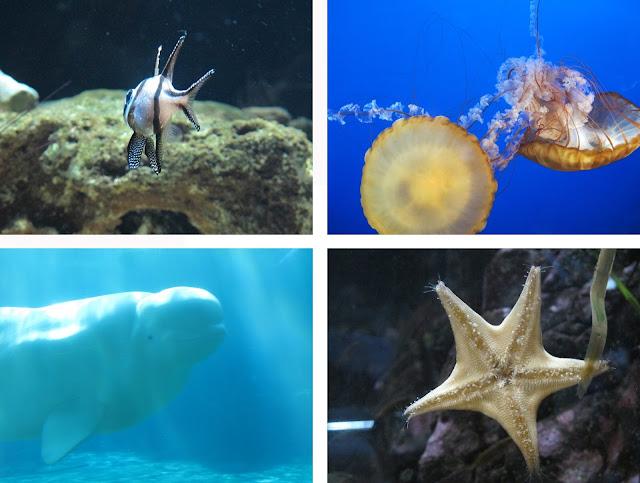 [vancouver] aquarium
