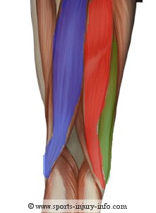 Trisha's Training Tidbits: Muscles and Injury